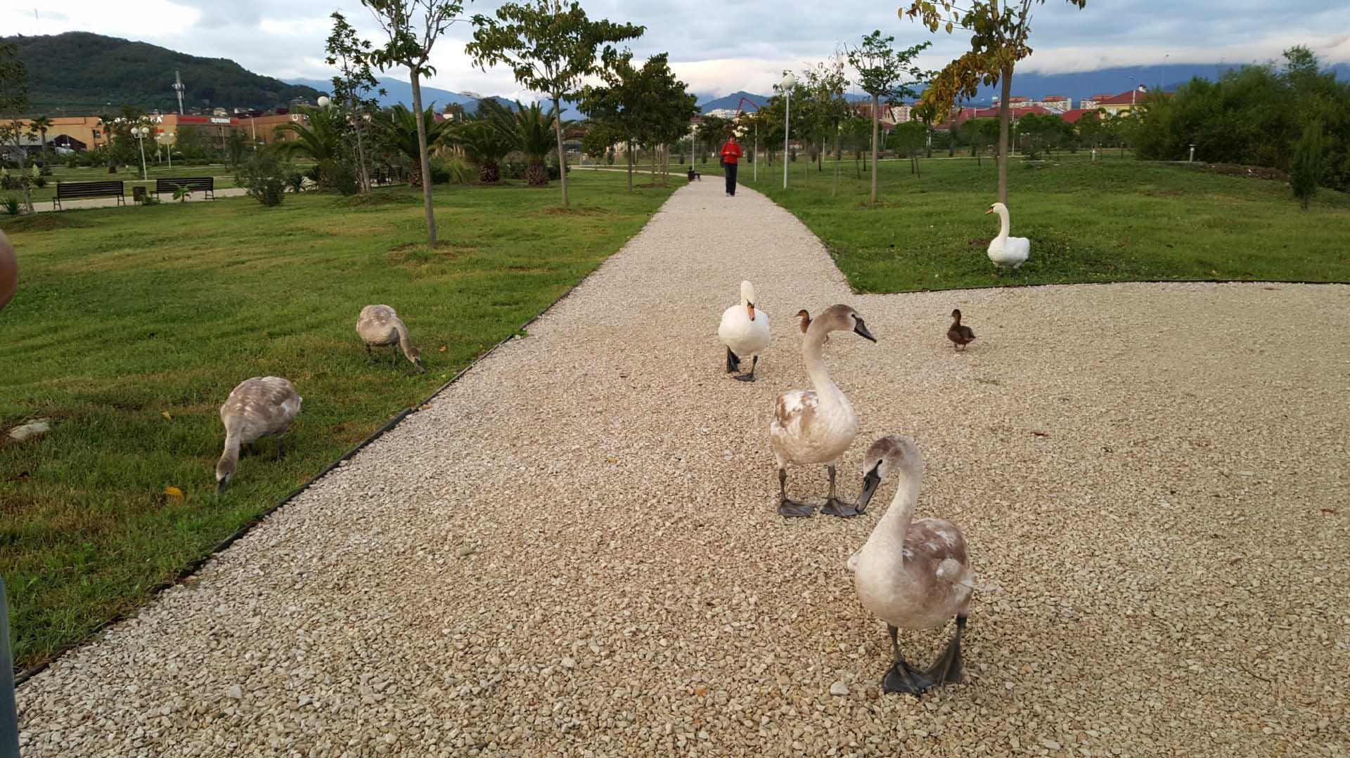 орнитологическому парку в Адлере